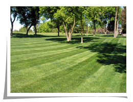 Lawn Care Specialists - Saunders Boys Lawn Care